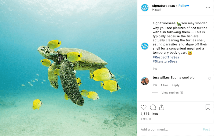 Instagram Daily Hashtags - Turtle Tuesday - Sked Social